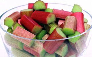 Польза и вред ревеня для здоровья человека: пищевая ценность и калорийность растения, рецепты блюд и противопоказания