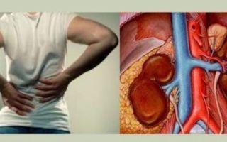 Лейкоциты в моче у женщин: пределы нормы, причины отклонений, правила подготовки к анализу