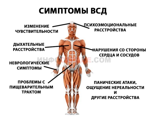 Желудочковая экстрасистолия: причины развития заболевания, характерные признаки, методы лечения