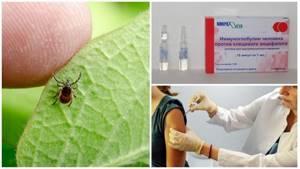 Через сколько проявляются симптомы укуса клеща у человека: инкубационный период, развитие болезней и возможные осложнения