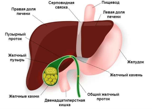 Как лечить кисту в печени: причины заболевания, медицинские и народные способы лечения