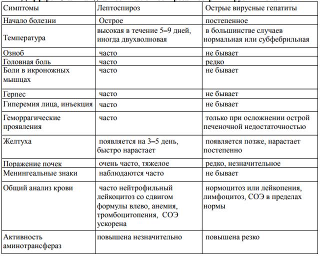 Лептоспироз у человека: источники заражения, характерные проявления, диагностика и способы лечения