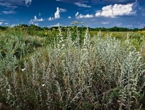 Отрыжка воздухом: причины и лечение данного явления